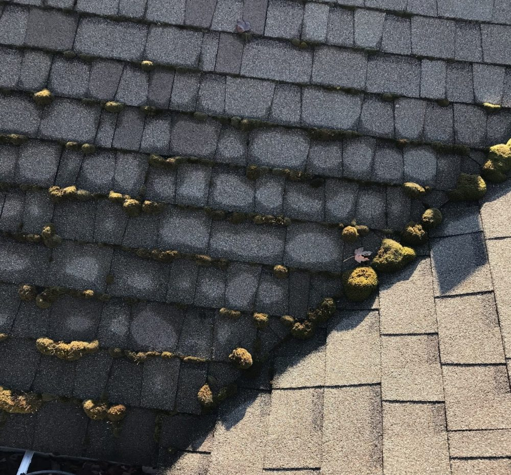 moss can damage your roof